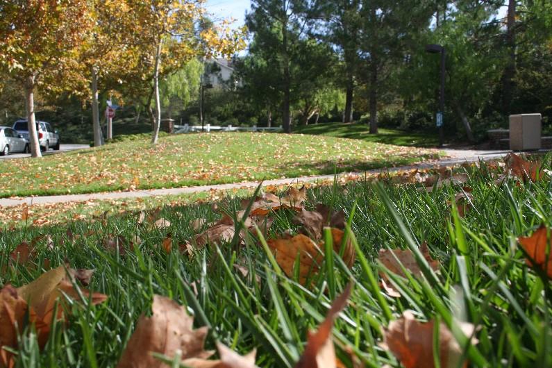 Newly fallen leaves dot the City's landscape.
