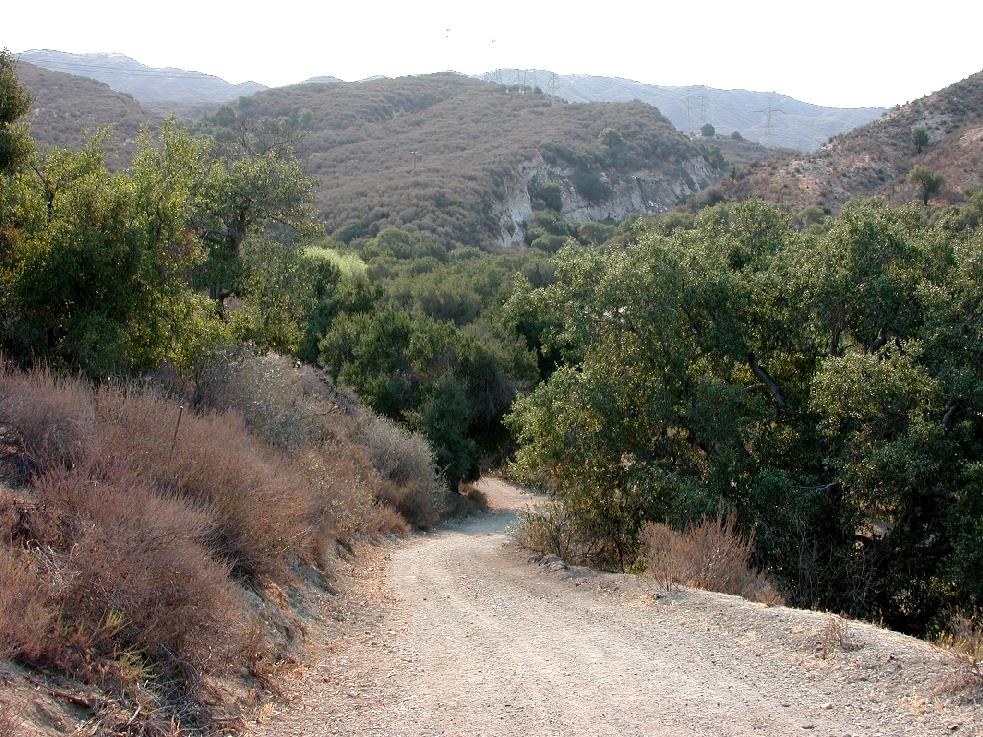 Oak trees blanket much of Santa Clarita's picturesque Open Space.